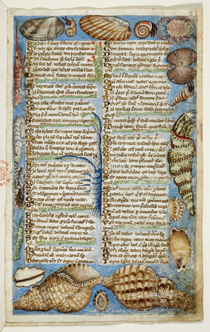 "BLB-S-00A801-2775 - Seashells and sea creatures, from the ""Treaty on virtues and vices and an anonymous story of prose in Sicily"", Cocharelli of Genoa (Master of the Codex Cocharelli), British Library, London - The British Library Board/Alinari Archives, Florence"