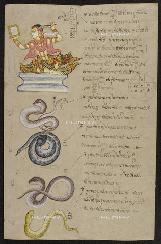 "BLB-S-00C135-6133 - The snake, an animal of the Chinese zodiac, with an explanation of the good and bad omens, illustration from the Thai manuscript of the late 19th century ""Phrommachat"", British Library, London - The British Library Board/Alinari Archives, Florence"