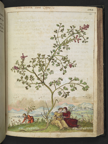 "BLB-S-22332F-121R - Women gathering plants at the feet of a specimen of Fumaria or Fumario ouvro Capno, drawing by the ""Roman States"" by Gherardo Cybo (or Cibo), published in ""De Re Medica"" by Pietro Andrea Mattioli, British Library, London - The British Library Board/Alinari Archives, Florence"