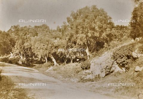 BPC-F-000018-0000 - Alberi di olivo nella campagna laziale - Data dello scatto: 1860-1864 - Archivi Alinari, Firenze