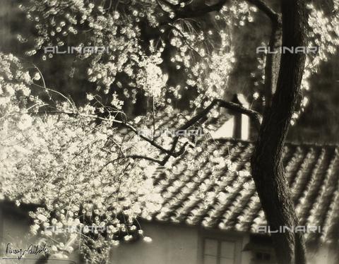 """BVA-F-000091-0000 - """"Mandorlo n fiore"""". Un ramo fiorito di mandorlo colpito dalla luce solare. Sullo sfondo è visibile il tetto di una abitazione."""