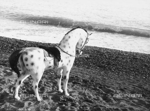 BVA-F-000272-0000 - Carousel horse on the beach near the sea.