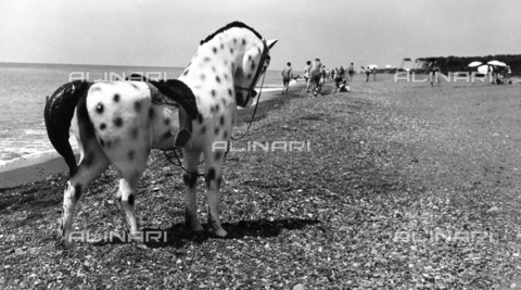 BVA-F-000280-0000 - Toy pony on the beach