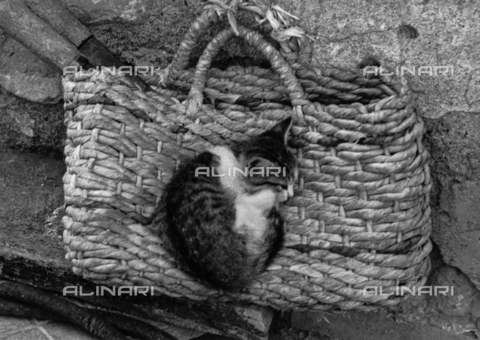 BVA-F-000417-0000 - Kitten sleeps on a straw purse
