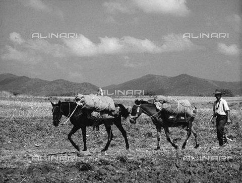 BVA-F-000908-0000 - Farmer with horses
