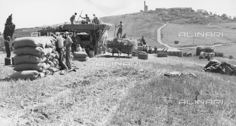 BVA-F-001181-0000 - Numerous peasants busy threshing. On the left a few sacks of wheat. In the background, on the hill, a town - Date of photography: 1955 -1960 ca. - Alinari Archives-Balocchi archive, Florence