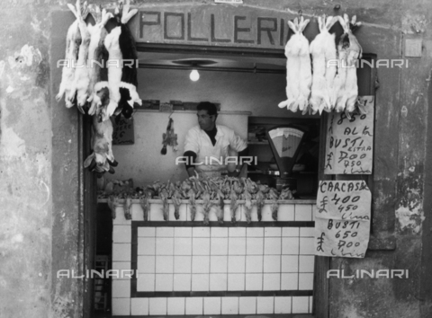 BVA-F-001222-0000 - A poultry shop with the butcher behind the counter - Date of photography: 1940 -1950 ca. - Alinari Archives-Balocchi archive, Florence