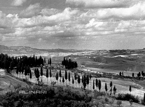 BVA-F-001264-0000 - Panorama of hills. In the foreground a row of cypresses - Date of photography: 1930 -1950 ca. - Alinari Archives-Balocchi archive, Florence