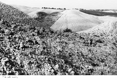 """BVA-F-001267-0000 - """"Crete Senesi"""" - Date of photography: 1955 ca. - Alinari Archives-Balocchi archive, Florence"""