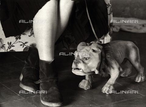 BVA-F-001409-0000 - Gambe femminili e giocattolo a forma di cane - Data dello scatto: 1960 ca. - Archivi Alinari, Firenze