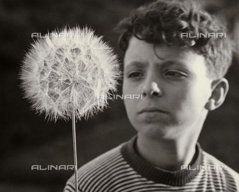 BVA-F-001667-0000 - A boy that looks at a dandelion