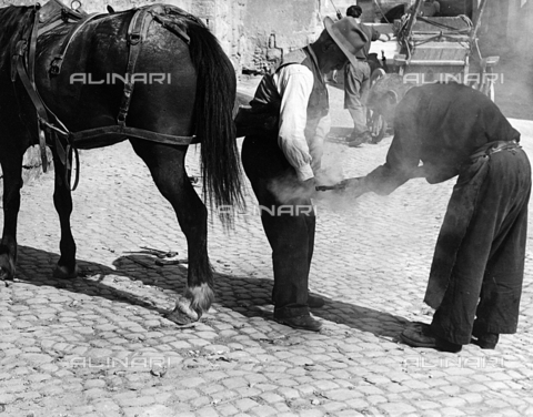 BVA-F-002397-0000 - Shoeing a horse