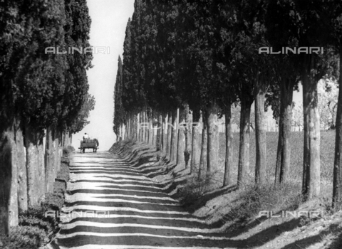 BVA-F-002723-0000 - Country road with cypresses