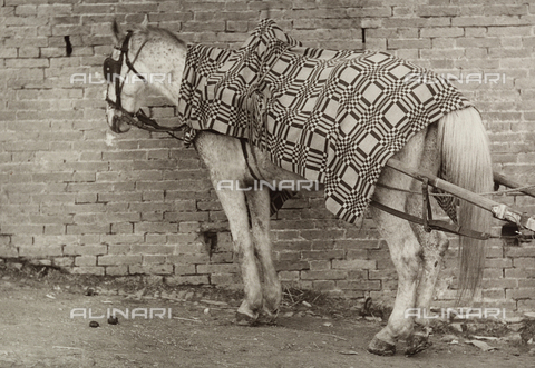 BVA-F-002769-0000 - Harnessed horse attached to a cart