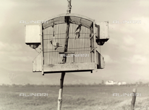 BVA-F-003666-0000 - Canaries in a cage