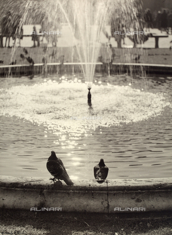 BVA-F-003677-0000 - Pigeons on the edge of a fountain