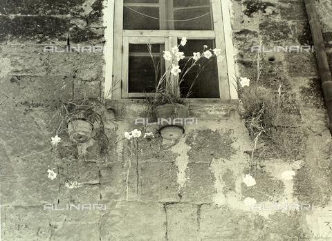 BVA-F-003762-0000 - Vasi di fiori appesi alla parete esterna di una vecchia abitazione, sotto ad una finestra. - Data dello scatto: 1951 - Archivi Alinari, Firenze
