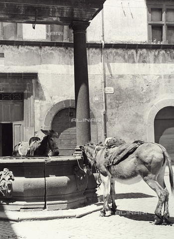 BVA-F-003763-0000 - Donkeys in the Erba piazza in Orvieto