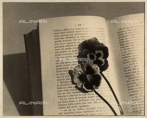 "BVA-F-003781-0000 - ""A memory"". Close-up of an open book with two dry flowers."