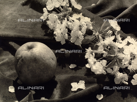 "BVA-F-003804-0000 - ""The flower and the fruit"""