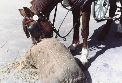 BVA-F-004494-0000 - Horse eating