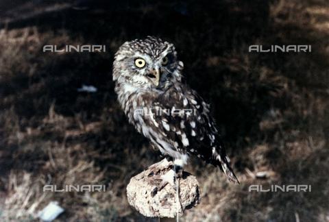 BVA-F-004872-0000 - Owl