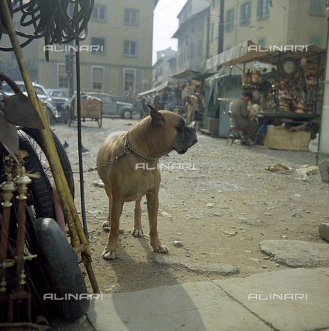BVA-S-C10013-0012 - Dog and junk dealers, Florence