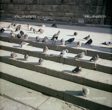 BVA-S-C10018-0006 - Pigeons, Florence