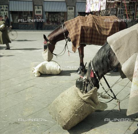 BVA-S-C10029-0014 - Horses, Florence
