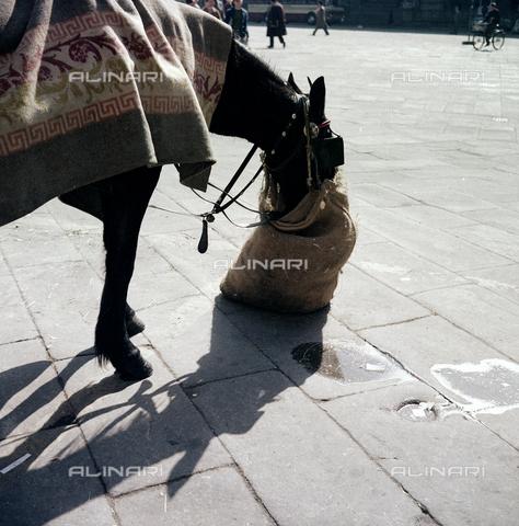 BVA-S-C10031-0001 - Horse, Florence