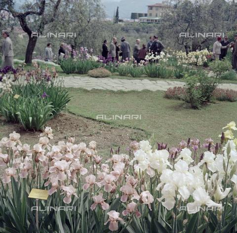 BVA-S-C10039-0005 - Garden, Florence