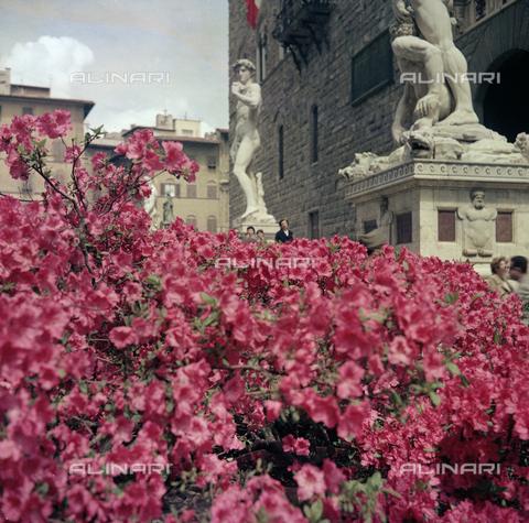 BVA-S-C10040-0001 - Flower Show in Piazza della Signoria, Florence