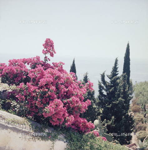 BVA-S-C10043-0007 - Flowers of Taormina