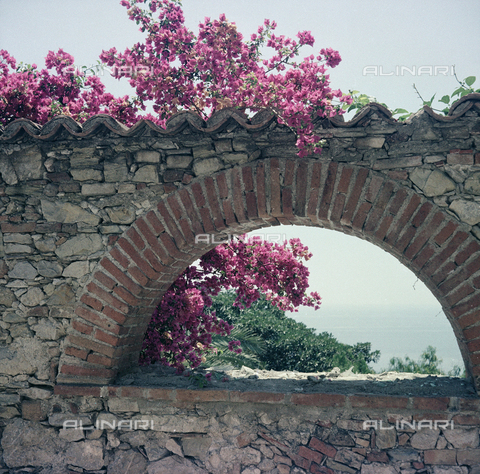 BVA-S-C10043-0011 - Flowers of Taormina