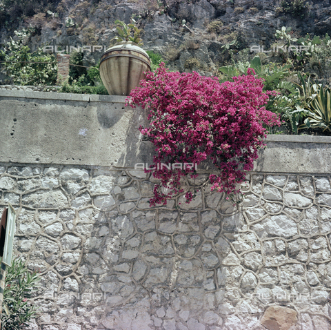 BVA-S-C10043-0013 - Flowers of Taormina