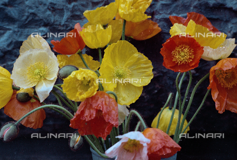 BVA-S-C1033A-0006 - Flowers