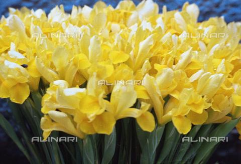 BVA-S-C1033A-0009 - Flowers