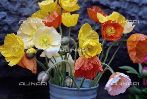 BVA-S-C1033A-0010 - Flowers