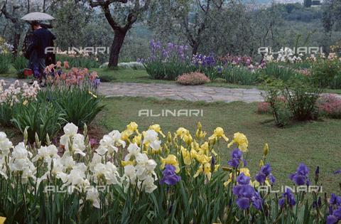 BVA-S-C1033A-0015 - Iris garden, Florence