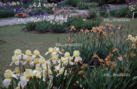 BVA-S-C1033A-0016 - Iris garden, Florence