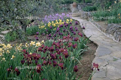 BVA-S-C1033A-0019 - Iris garden, Florence