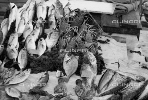 BVA-S-S10010-0035 - School of fish - Date of photography: 1960-1961 - Fratelli Alinari Museum Collections-Balocchi Archive, Florence