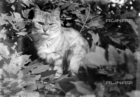 CAD-S-250005-0010 - Portrait of a cat among the leaves