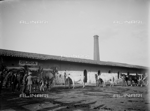 CAD-S-260002-0011 - Parade of grooms with horses in front of the jury - Date of photography: 1920-1930 ca - Fratelli Alinari Museum Collections-Cammarata Donation, Florence