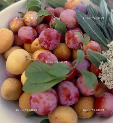 CAL-F-006386-0000 - Frutti del susino appena raccolti - Data dello scatto: 1990 ca. - Archivi Alinari, Firenze