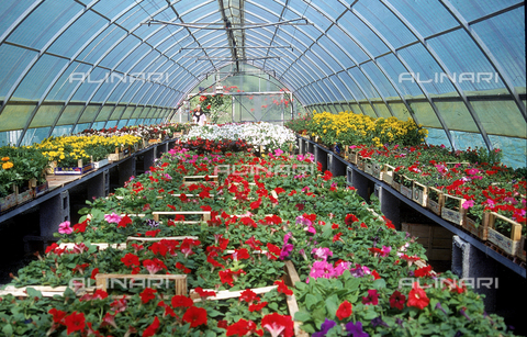 CAL-F-006399-0000 - Greenhouse for flower cultivation