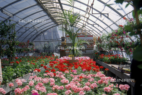 CAL-F-006532-0000 - Floraculture greenhouse interior