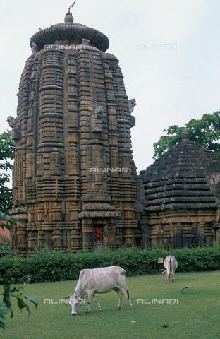 CAL-F-006677-0000 - Il tempio Siddheswar, presso Bhubaneshwar, a Orissa Puri, in India. Nei pressi dell'edificio sacro pascolano due vitelli bianchi. - Data dello scatto: 1989 - 1991 - Archivi Alinari, Firenze