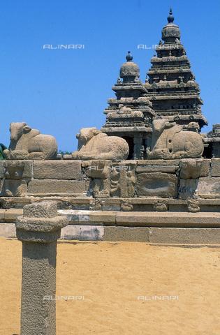 CAL-F-006695-0000 - Statue raffiguranti animali distesi, particolare del Tempio di Shore, nei pressi di Mahabalipuram, in India. L'edificio è collocabile nella dinastia Pallava. - Data dello scatto: 1989 - 1991 - Archivi Alinari, Firenze