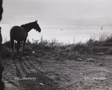 CGD-F-000237-0000 - Horse on the shore of a lake - Date of photography: 1955-1965 - Fratelli Alinari Museum Collections-Corinaldi Donation, Florence